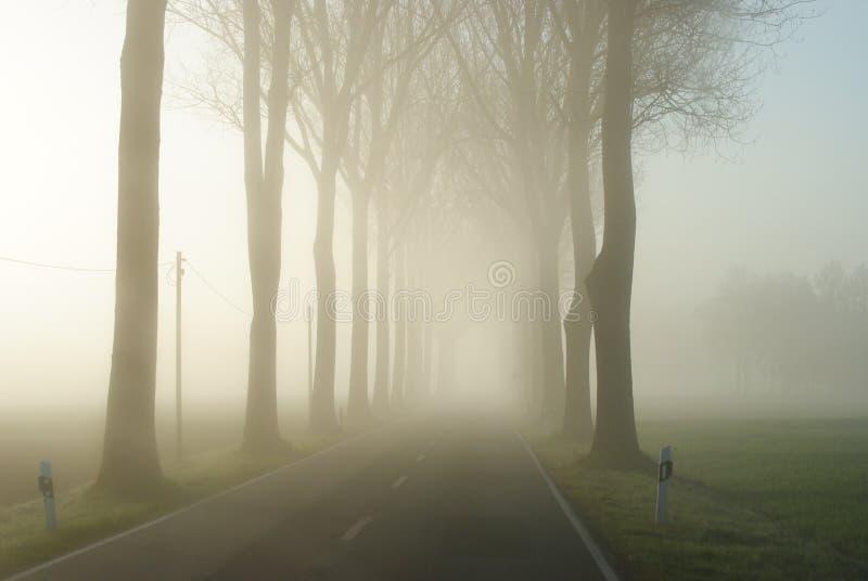 在一个不尽的农村风景的乡下公路与光秃的树行  库存照片