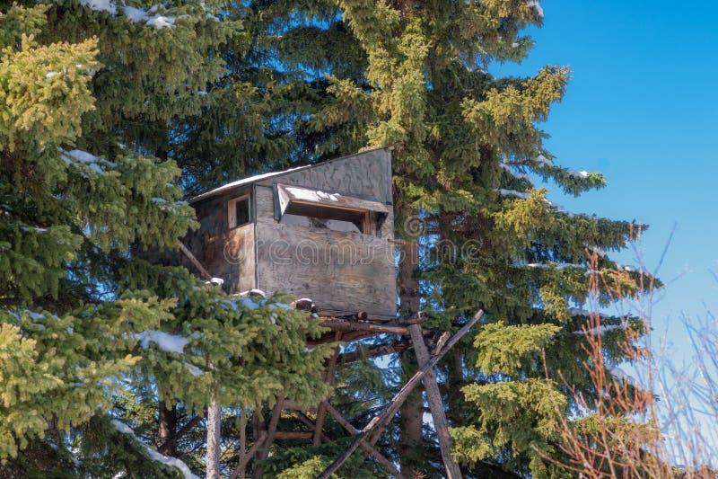 在一个云杉的补丁的Treestand 库存照片