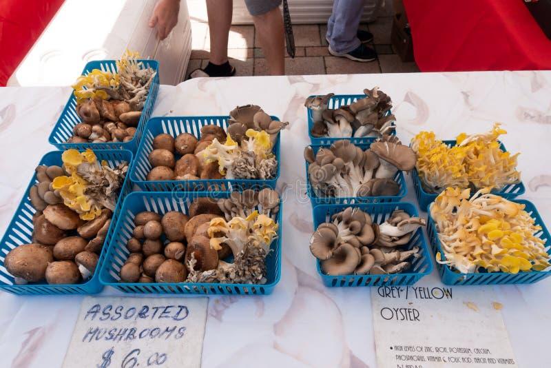 在一个产物摊位的各种各样的蘑菇在星期六早晨农夫市场上 免版税库存照片