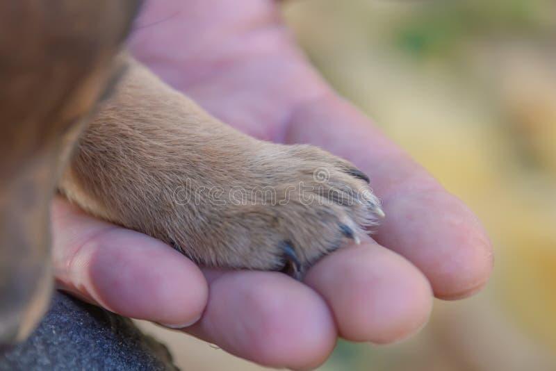 在一个人的手上的小狗爪子 动物庇护所 小狗收养 库存图片