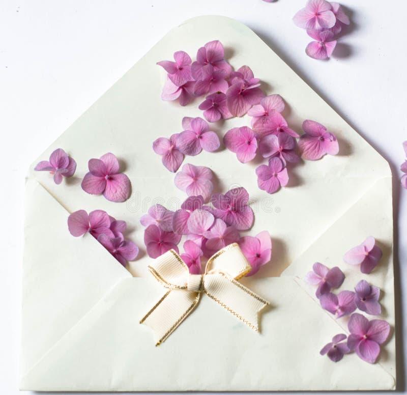 在一个信封的美丽的新鲜的紫色花在白色背景 图库摄影