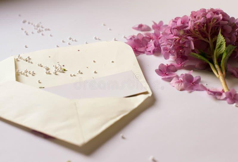 在一个信封的美丽的新鲜的紫色花在白色背景 免版税库存照片