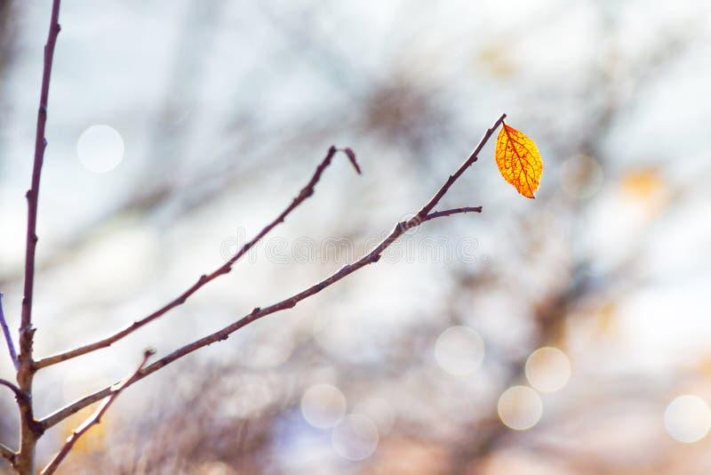 在一个光秃的分支的偏僻的黄色叶子在秋天forest_ 免版税库存照片
