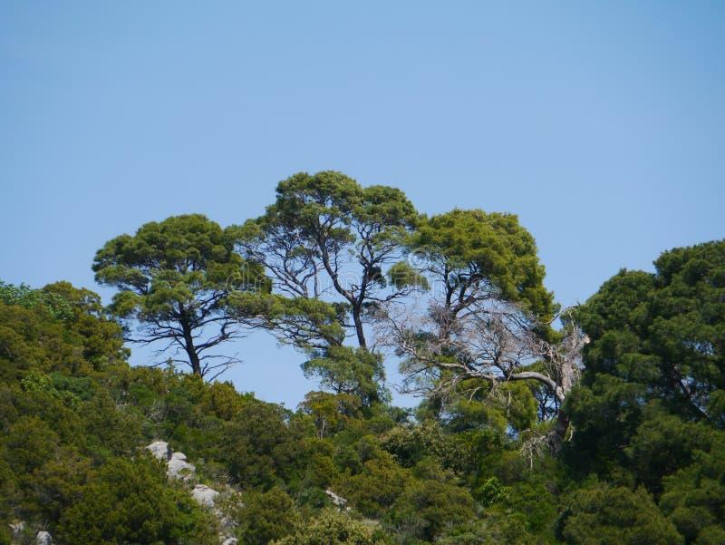 在一个克罗地亚海岛的树的看法Mediterranen的 库存照片