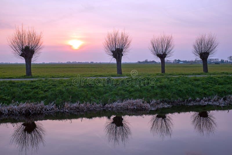 在一个典型的荷兰风景的播种的杨柳在日落 库存图片