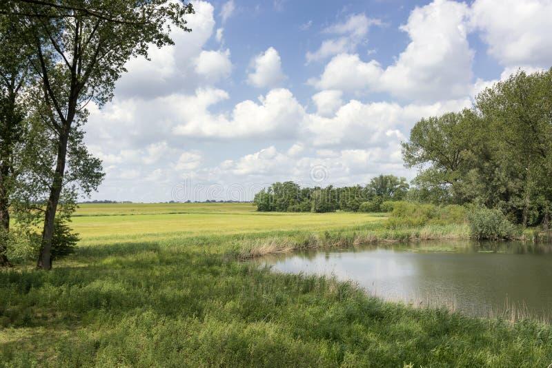 在一个典型的风景的看法在荷兰 与美丽的云彩、树、池塘和绿草的完善的荷兰天空 免版税库存照片