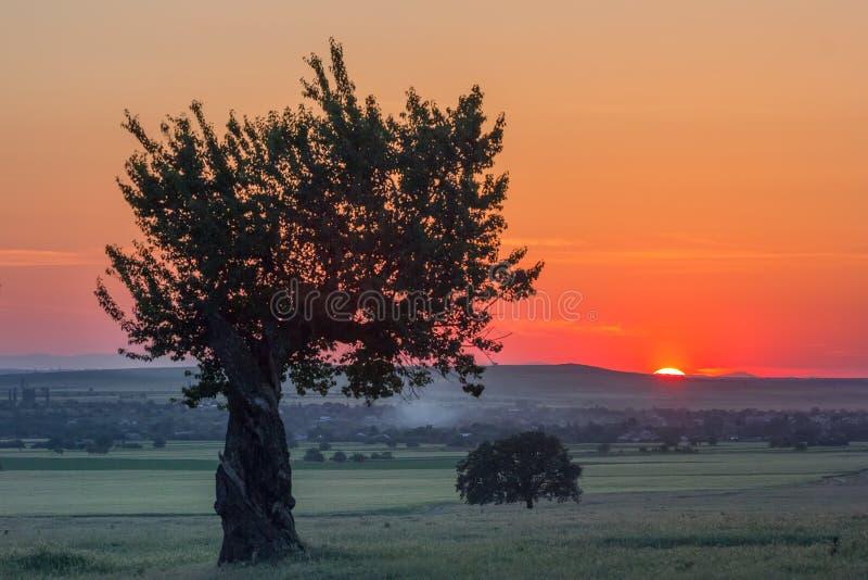在一个农村场面的美丽的树在日落在夏天 免版税库存图片