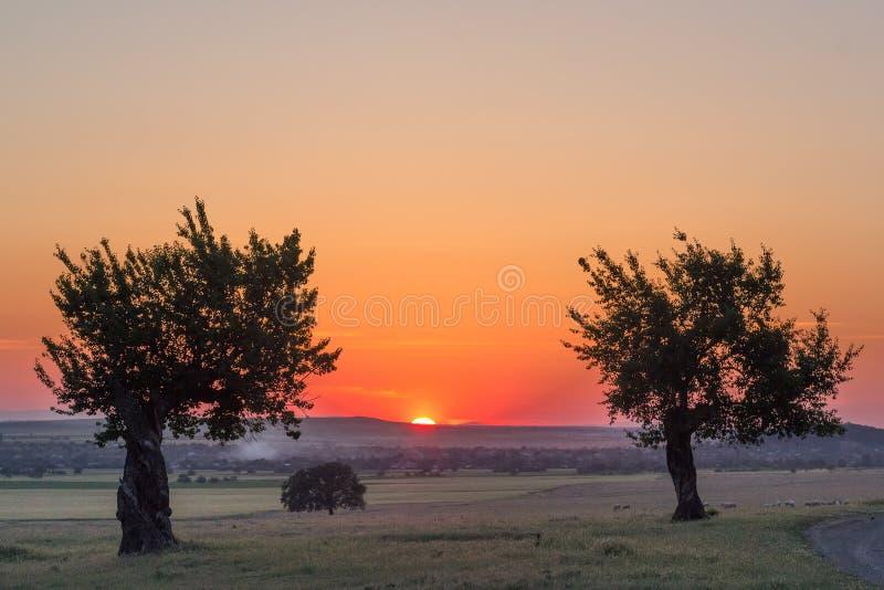 在一个农村场面的美丽的树在日落在夏天 库存图片