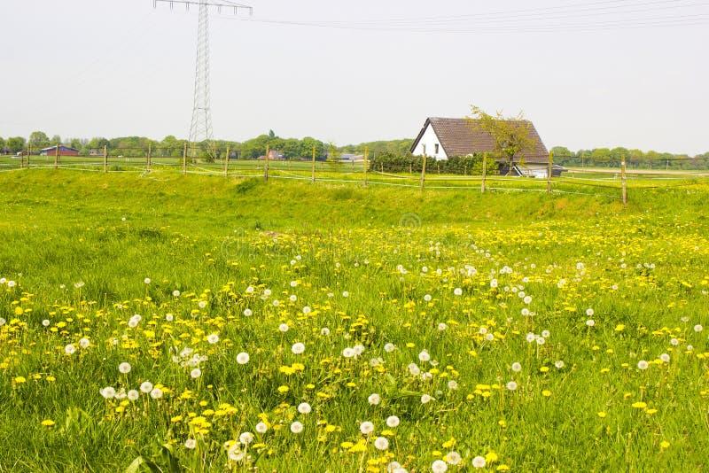 Download 在一个农村房子附近的春天草甸 库存图片. 图片 包括有 德国, 问题的, 范围, 莱茵河, 环境, 蒲公英 - 72356993