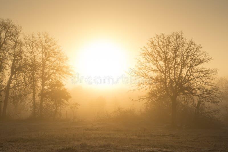 在一个农村牧场地风景的有雾的日出 图库摄影