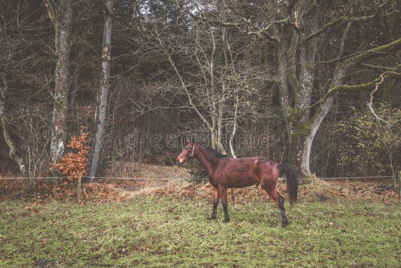 在一个农村草甸的布朗马秋天的 免版税库存图片