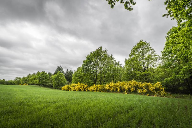 在一个农村领域的多云天气与笤帚 免版税库存照片