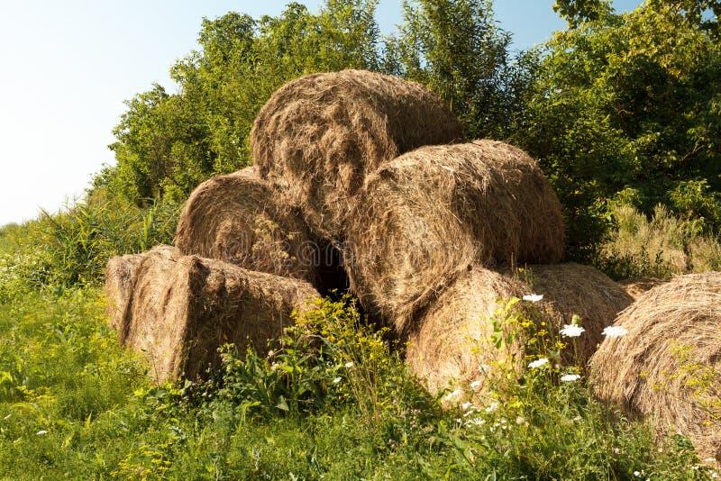 在一个农村领域的干草捆 免版税图库摄影