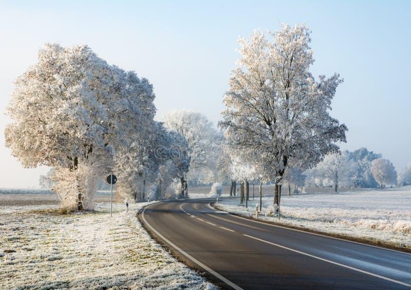 在一个冬天风景的乡下公路与结霜的树 免版税库存照片