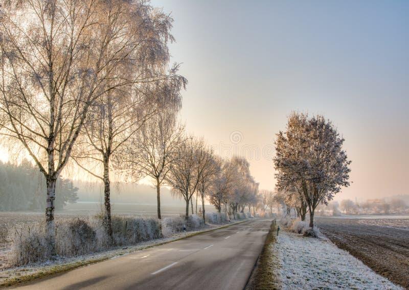 在一个冬天风景的乡下公路与结霜的树 库存图片