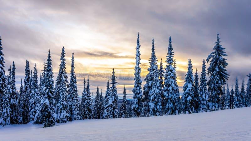 在一个冬天风景的日落与在滑雪小山的积雪的树在太阳附近村庄锐化 库存图片
