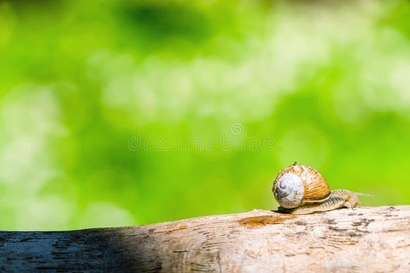 在一个分支的蜗牛在一个绿色森林里 免版税库存图片