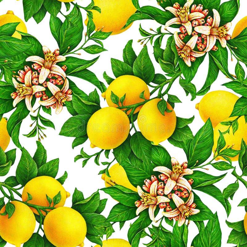 在一个分支的黄色柠檬果子与在白色背景和花隔绝的绿色叶子 得出无缝的样式的水彩 库存例证