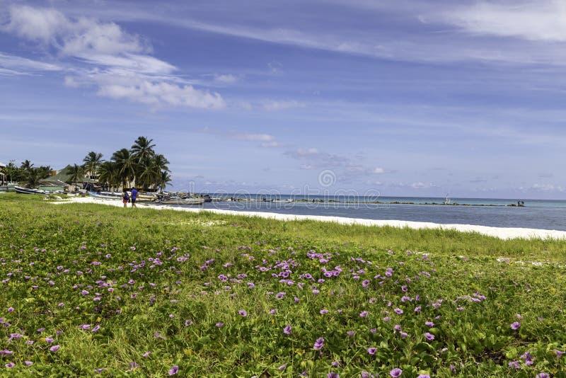 在一个加勒比海滩的花 免版税库存照片