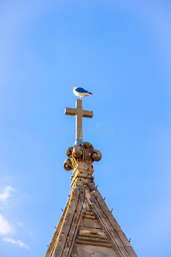 在一个十字架的海鸥在钟楼的屋顶 免版税库存图片