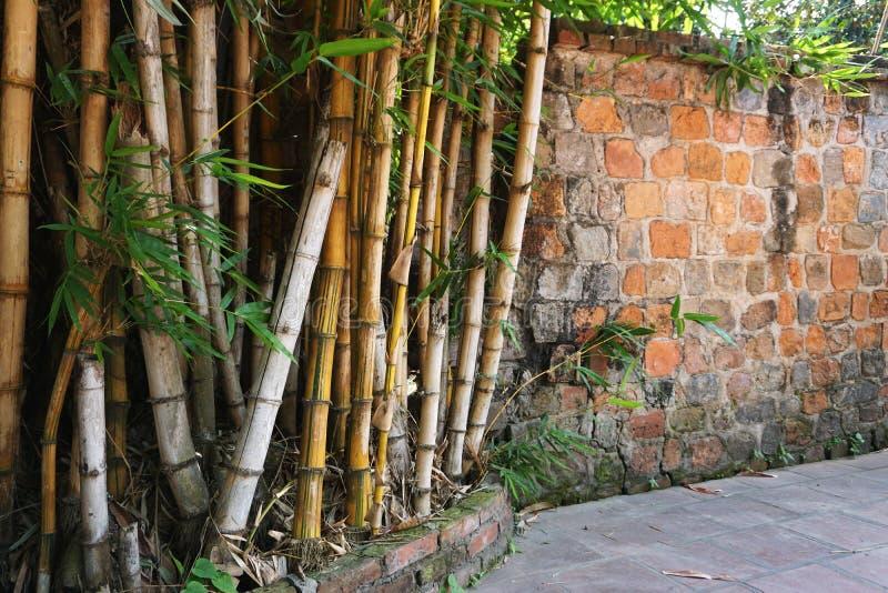 在一个古老石墙旁边的成熟竹树丛在越南 免版税库存图片