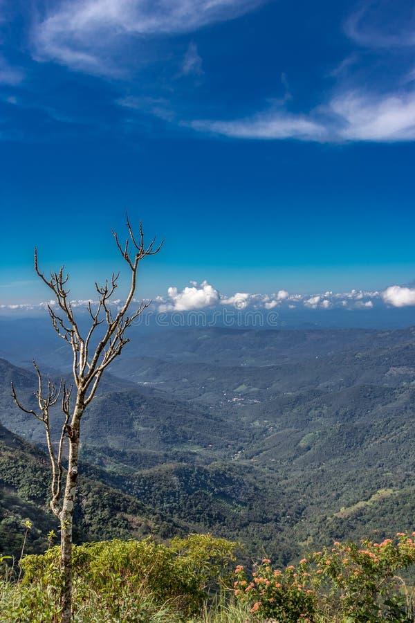 在一个可爱的蓝色小山风景的干燥树 图库摄影