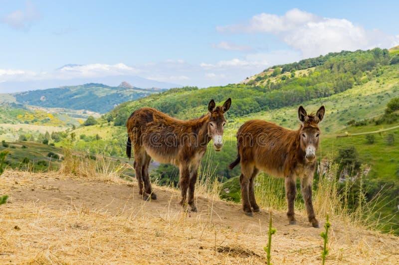 在一个土墩的两头驴在山的一个草甸