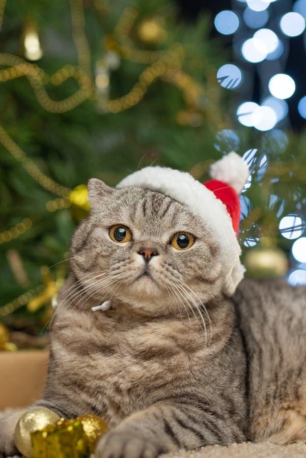 在一个圣诞老人项目帽子的一只逗人喜爱的猫反对被弄脏的圣诞灯 免版税库存照片