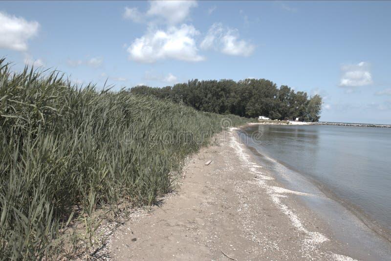 在一个夏日期间,在伊利湖的美丽的湖边海滩 免版税库存图片