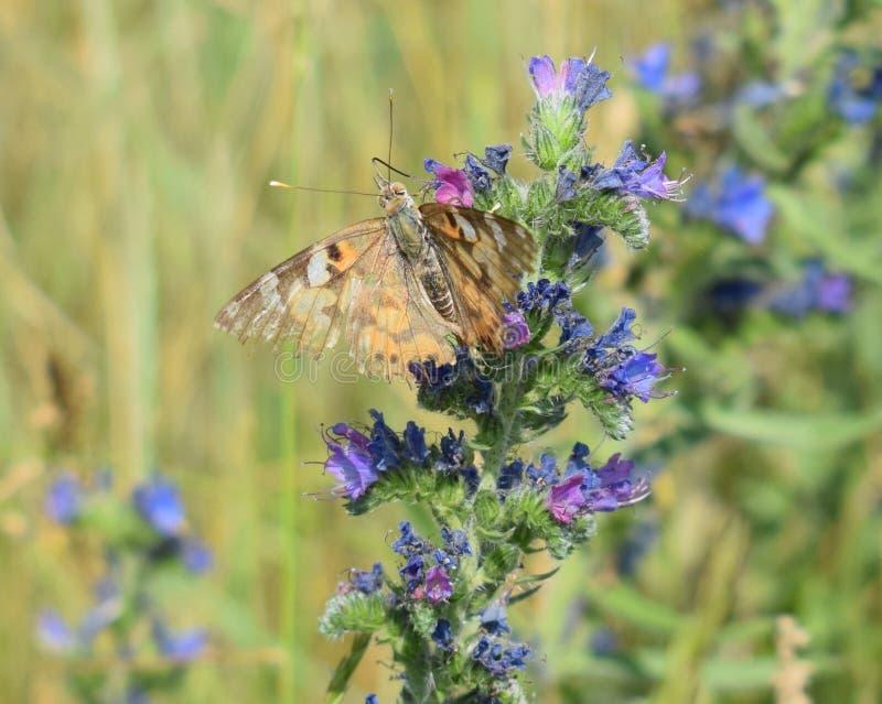 在一个夏日,蝴蝶坐花 图库摄影