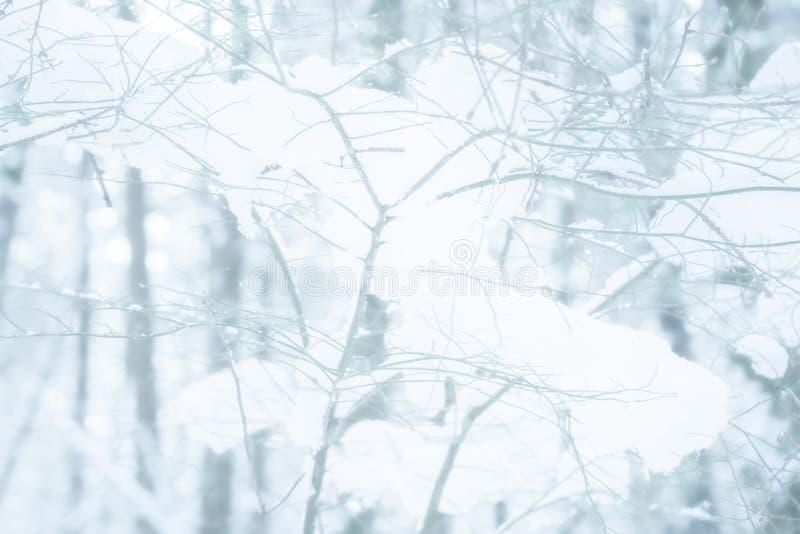 在一个多雪的森林场面的雪盖的分支树的退色的,成为不饱和&无言背景 免版税库存照片