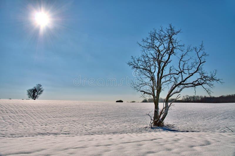 在一个多雪的领域的孤零零树 库存图片