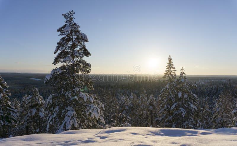 在一个多雪的风景的斯堪的纳维亚冬天 日落的专业照片 免版税图库摄影