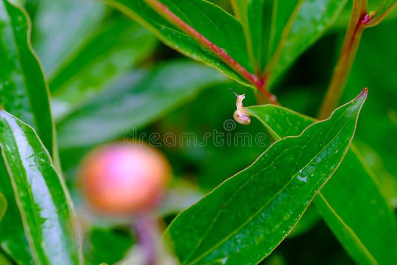 在一个大世界的微小的蜗牛 库存照片