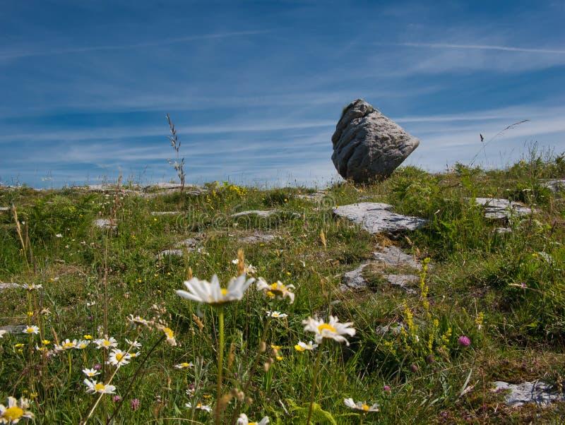 在一个大岩石前面的花草甸在爱尔兰 库存图片