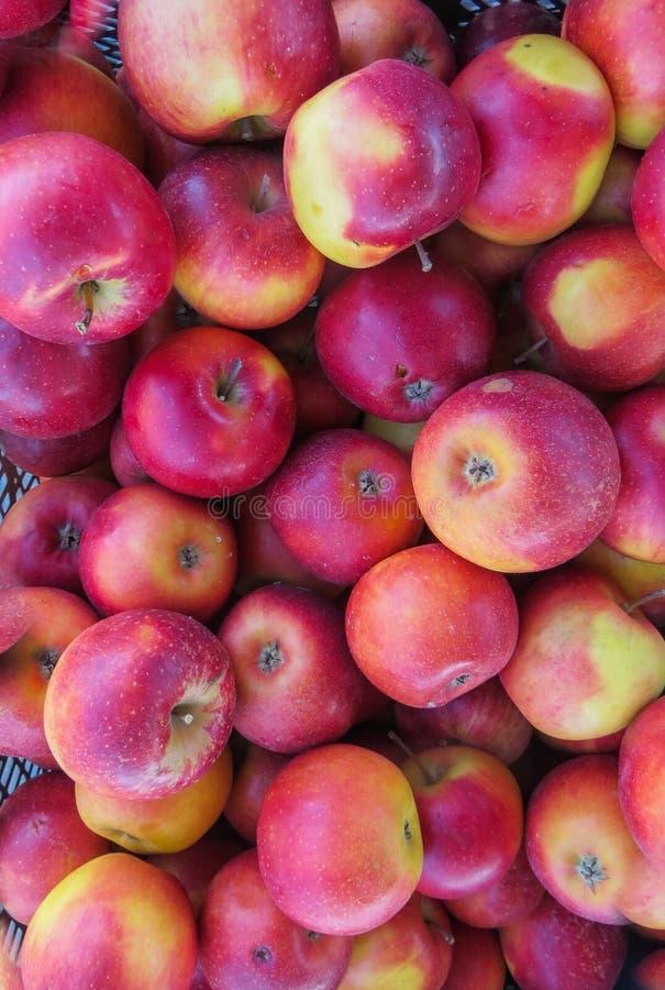 在一个大木箱,关闭的新鲜的有机红色苹果,背景 免版税库存照片
