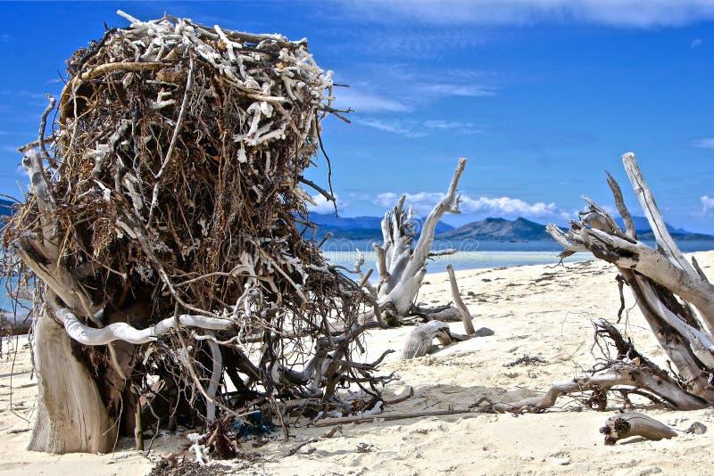 在一个天堂般的海滩的巨大的老鹰的巢 免版税库存照片