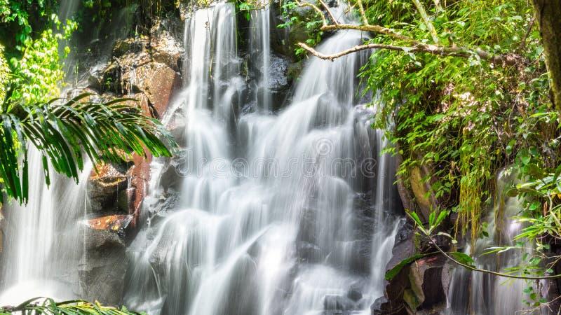 在一个密集的密林沟壑的美丽的落下的瀑布 免版税库存图片