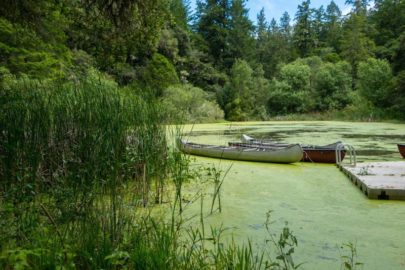 在一个密集的池塘靠码头的独木舟 库存照片