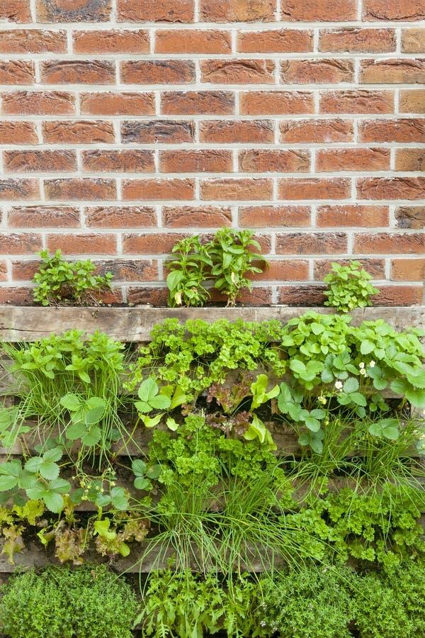 在一个小地方的垂直的庭院草本 图库摄影