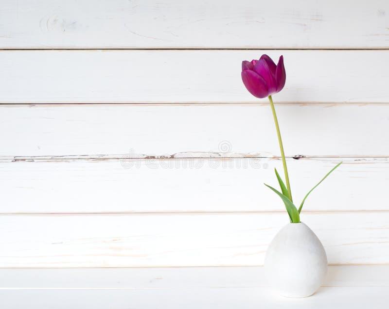 在一个小现代浅灰色的花瓶的一紫色春天郁金香在白色表上和反对困厄的shiplap木板背景wi 库存图片