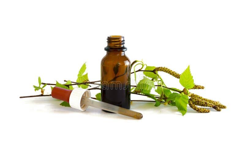 在一个小瓶的桦树与新鲜的叶子的酊和分支 库存图片