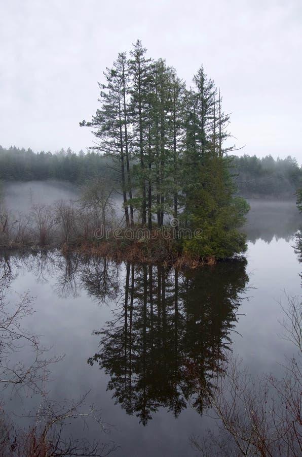 在一个小,被充斥的海岛上的冷杉木在Thetis湖中寂静的水域被反射  库存照片