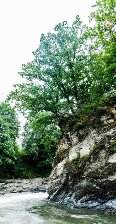 在一个岩石的树在山河上 库存照片