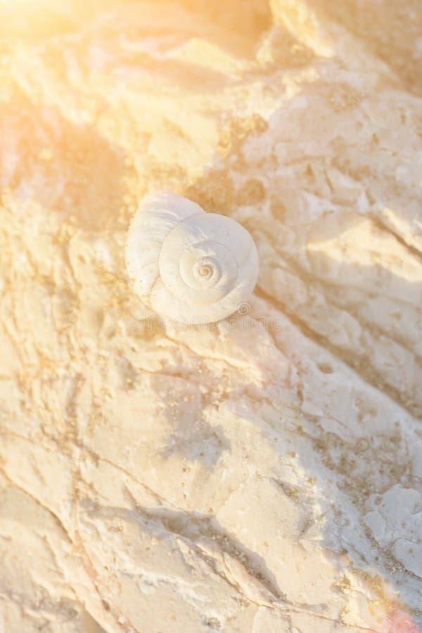 在一个岩石的美好的白色米黄螺旋海壳在金黄极好的桃红色阳光车费 软的淡色 katya krasnodar夏天领土假期 库存照片