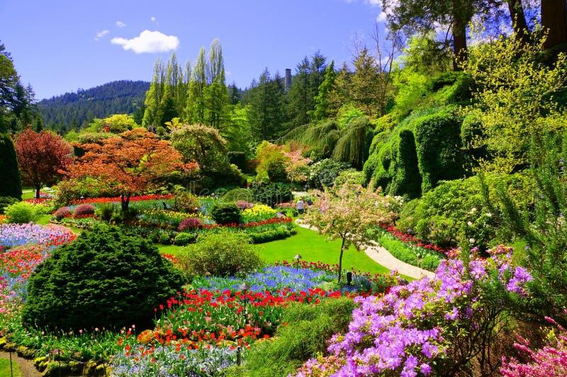 在一个庭院春天,维多利亚,加拿大的五颜六色的花的看法 免版税库存照片