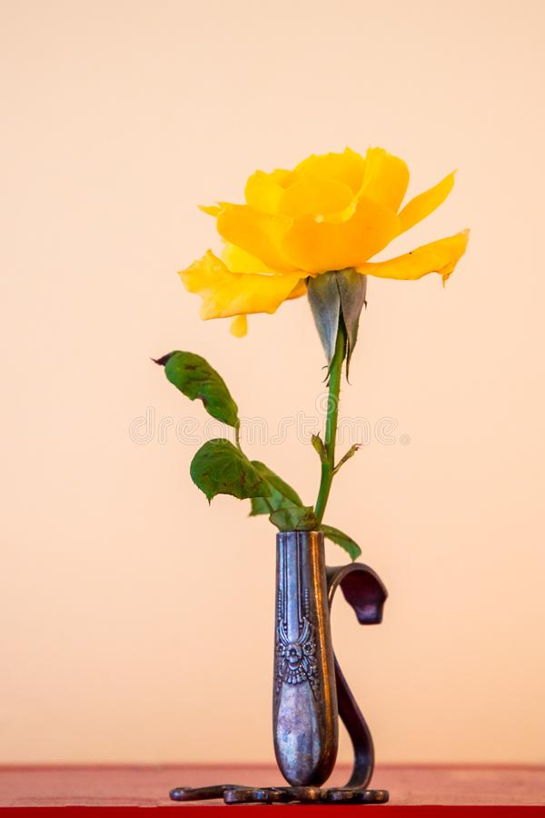 在一个微小的银色华丽花瓶的唯一黄色玫瑰在一间黄色屋子 图库摄影