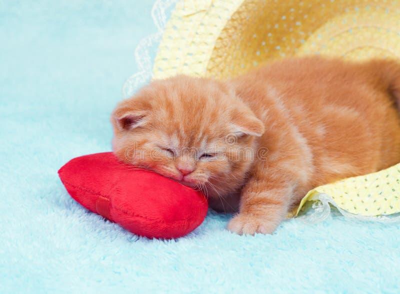 在一个心形的枕头的小猫 免版税图库摄影