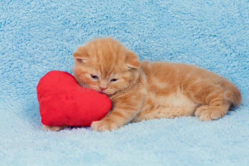 在一个心形的枕头的小猫 图库摄影