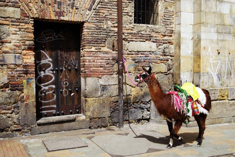 在一个房子前面被栓的黑骆马在波哥大 免版税库存图片